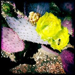 Yellow Rose of Tucson by Jason Willis