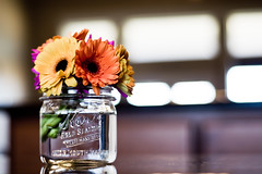 A little pop of color (Celina Innocent) Tags: flower water daisies mason jar