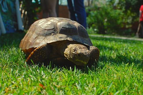 TortoiseEdit