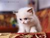 قطتي احلي قطة بالعالم نياااااااااااااو  5681185852_bff7ffe9bb_t