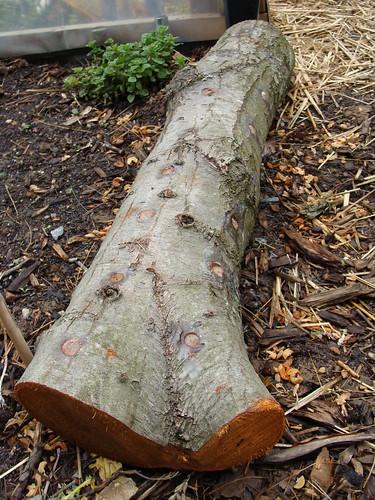 Close-up of Mushroom Log