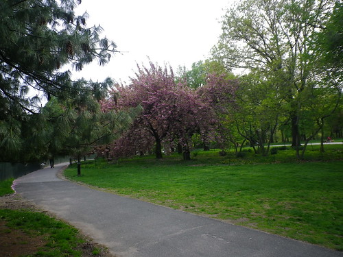 central park springtime. central park springtime.