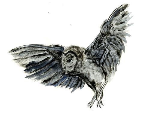 owlwc046 by jina11