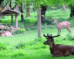Wildpark Ingolstadt (trashcutter) Tags: wild animals germany bayern deutschland bavaria zoo tiere deer tier hirsch ingolstadt