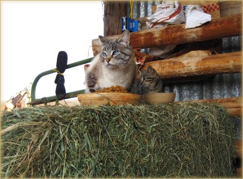Feral Kitten Girl
