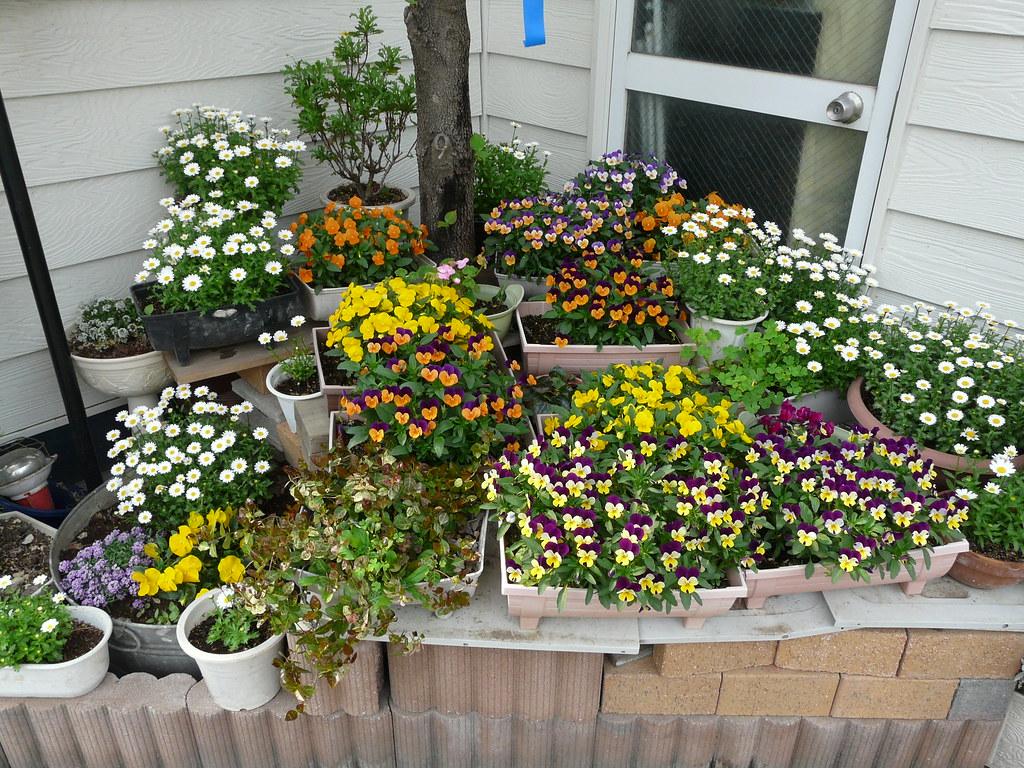 Dense Tiered Garden