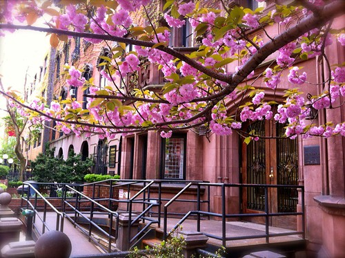 Blooms overhead in Manhattan