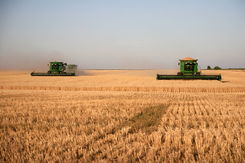 Three of our combines put their GPS to use in this flat field.