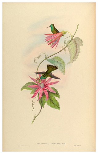 017-An introduction to the Trochilidae or family of humming-birds- Vol 5- 1861-John Gould