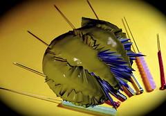 Acupuncture Needles (bforat) Tags: art hills beverly needles acupuncture treatment forat behnaz