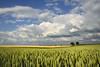 Avennes (pierre hanquin) Tags: color landscape geotagged nikon day belgium belgique cloudy pierre getty nuages paysage wallonie naturepoetry hannut d7000 hanquin