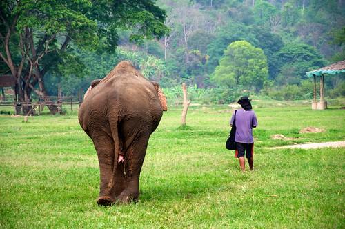 Elephant Nature Park 89 by mariskar