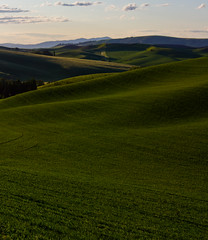 06.10 - Iconic Palouse (BenjaminWalker) Tags: green june sunrise project photography spring ben wheat hills walker chase benjamin 365 iconic rolling canola palouse 2011