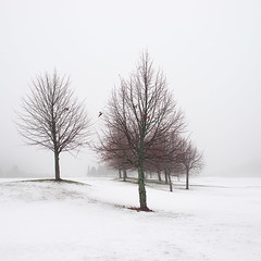 Winter Poem II (Vesa Pihanurmi) Tags: snow winter trees fog mist minimalism espoo finland white red