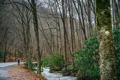 Pisgah National Forest (bradleysiefert) Tags: appalachianmountains ashevillearea northcarolina pisgahnationalforest forest river stateforest pisgahforest unitedstates us