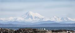 Mount Baker (David Badke) Tags: oakbay bc mountain