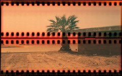 There was something so pleasant about that place (QsySue) Tags: abandoned yellow mediumformat desert mud decay dirt palmtree saltonsea boxcamera fujisuperia800 sprocketholes colorfilm northshoreyachtclub redscale reallywide respooled35mmfilm 116camera titleisagnarlsbarkleylyric kodakno2abrownie116camera somethinglivingatthesaltonsearemarkable