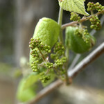 Wildflower_Center_075 thumbnail
