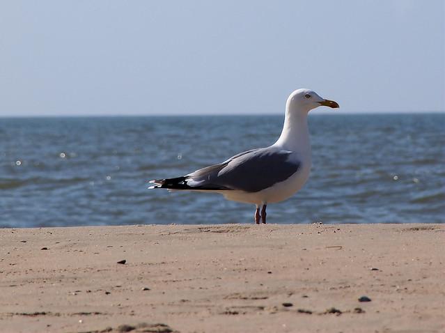 Wandelen op het strand van Callantsoog