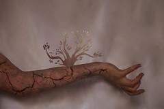 Influence Of Environment (295/365) (Nana-Photography) Tags: tree 50mm nikon hand manipulation 365 cracks conceptual f18 bloodvessel crackedskin d90 nanaphotography