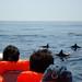 Pelagic Boat Trips . Saídas pelágicas