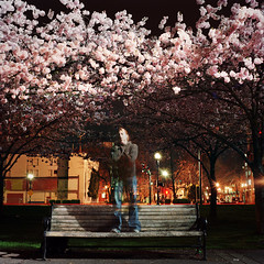 easy come, easy go (sakura self portait) (manyfires) Tags: park trees portrait film me night oregon self dark bench square portland cherry evening waterfront blossoms hasselblad bloom pacificnorthwest sakura pdx fleeting cherrytrees palabra hasselblad500cm