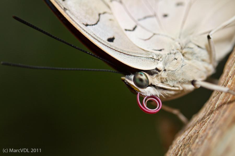 Sortie au Jardin des Papillons de Grevenmacher le 03 Avril 2011 : Les photos 5598919646_35802a7828_o