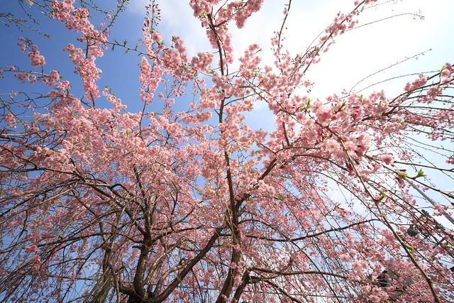 枝花の広がり