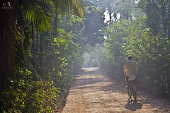 Cyclist (Prashhant) Tags: morning cycle konkan kokandiveagar