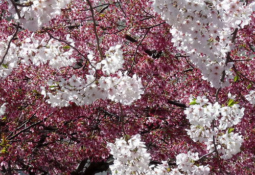 abstract tree flowers