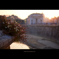 ... (stella-mia) Tags: sunset sun rome spring dof bokeh 2470mm basilicaspietro hightlight canon5dmkii
