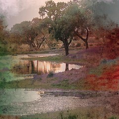 Short story (Alda Cravo Al-Saude) Tags: creative moment naturepoetry creativemoment estremità
