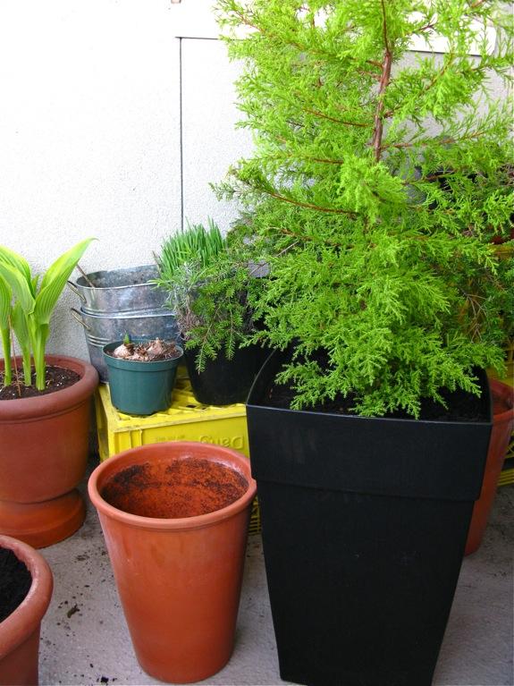 balcony gardening plants 004
