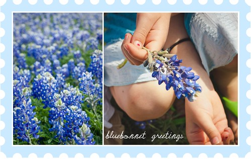 Bluebonnet Greetings