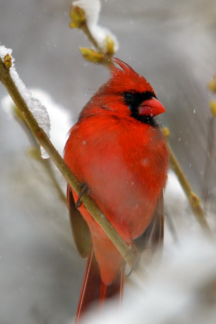 last storm cardinal