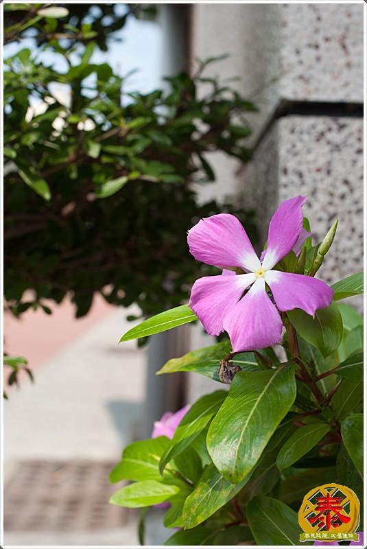 2011.04.15-16 府城國返家日記 (10)