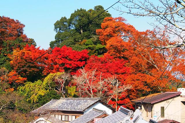20101120_131219_吉野山