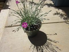 IMG_0291 (karenbee_) Tags: frontporch garden11