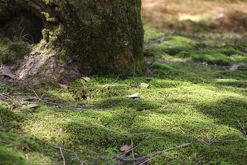 まるで草原のような苔