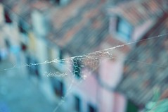 Cobweb.