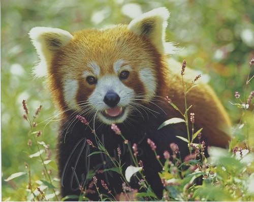 panda_signed