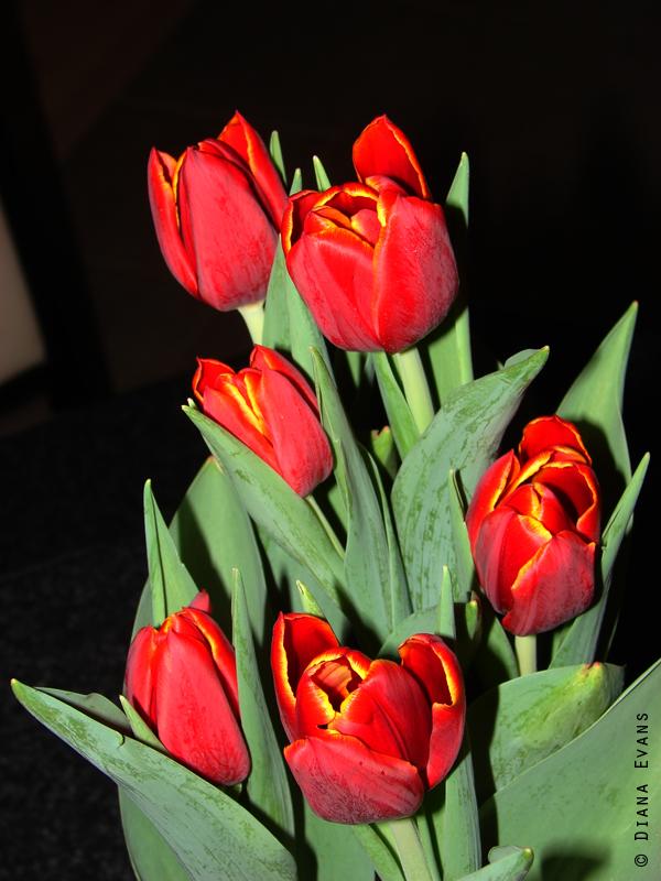 April 23rd 2011 002