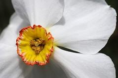 Flower Macro.
