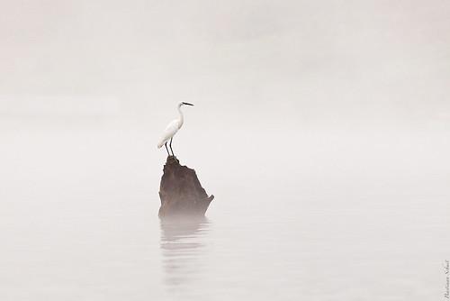 Misty-rious Heron by Bastiaan Schuit