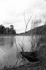 Somerset Dam - Downstream 4 B&W (Glenn Liam Kelly) Tags: reflection river landscape blackwhite queensland somersetdam