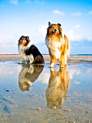 splendente (Mio) Tags: reflection beach dogs sunrise collie candy lassie impressedbeauty