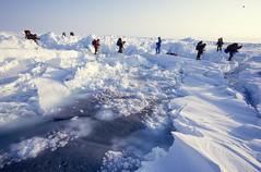 img108 (Weber Arctic Expeditions) Tags: ice richard misha weber northpole frostbite arcticocean polarexpedition malakhov wardhuntisland fischerskis polarbridge polartraining capearkticheskiy dimitrishparo shparo