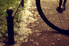 pollen (vodka twist) Tags: berlin bike germany deutschland pollen bycicle berlino