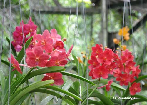 Penang Botanic Garden