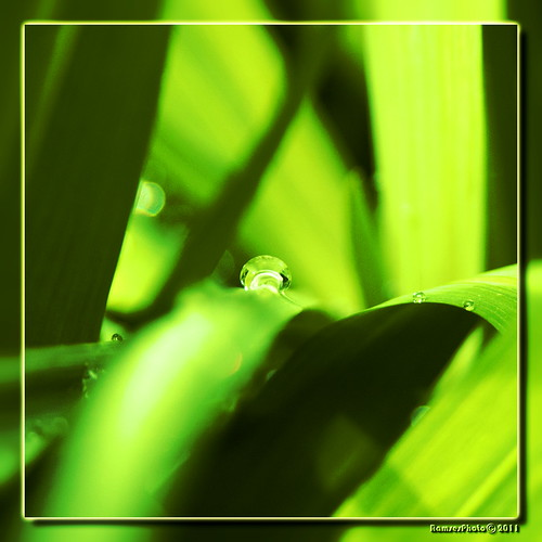 Waterdrop. by RamsesPhoto
